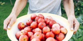 apples for jucing, omega juicer